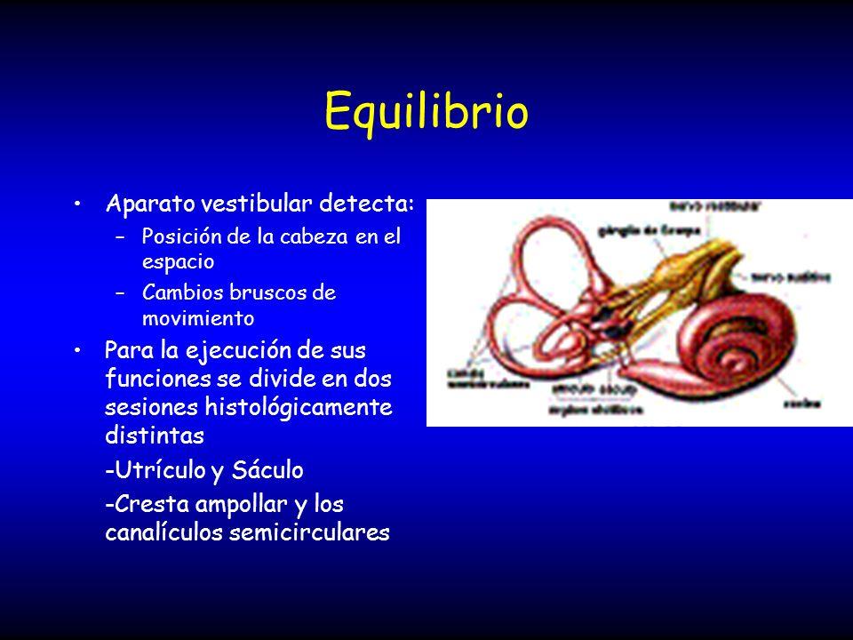Equilibrio Aparato vestibular detecta: