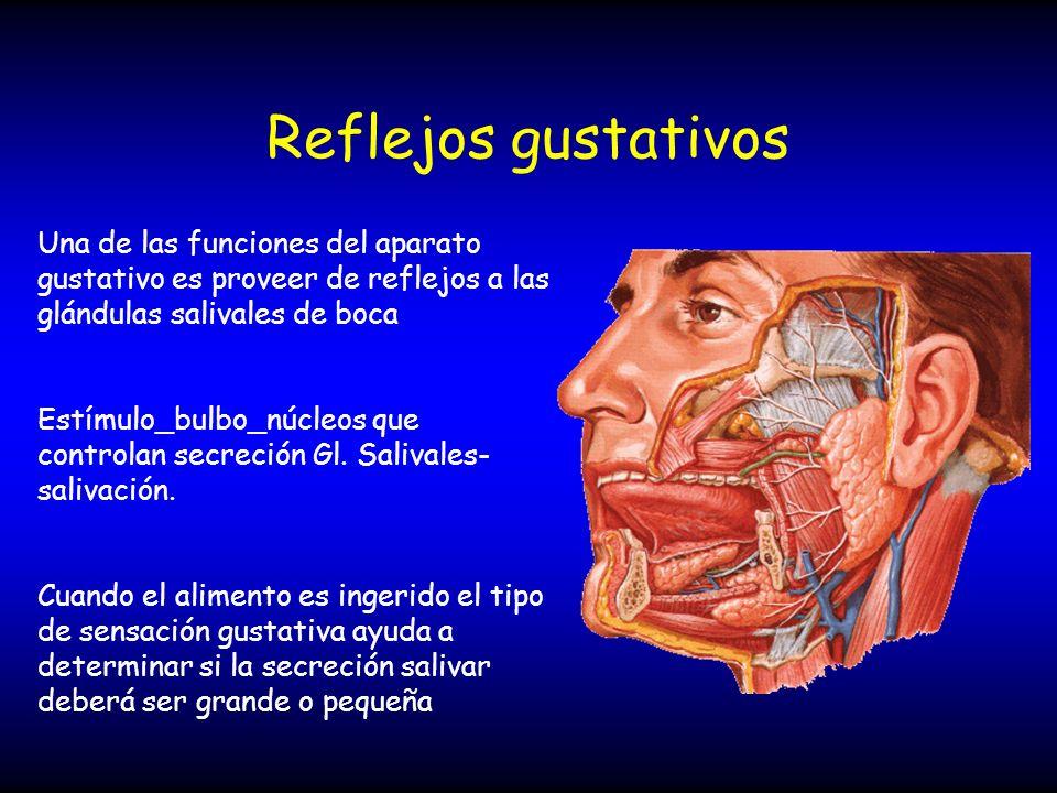 Reflejos gustativos Una de las funciones del aparato gustativo es proveer de reflejos a las glándulas salivales de boca.