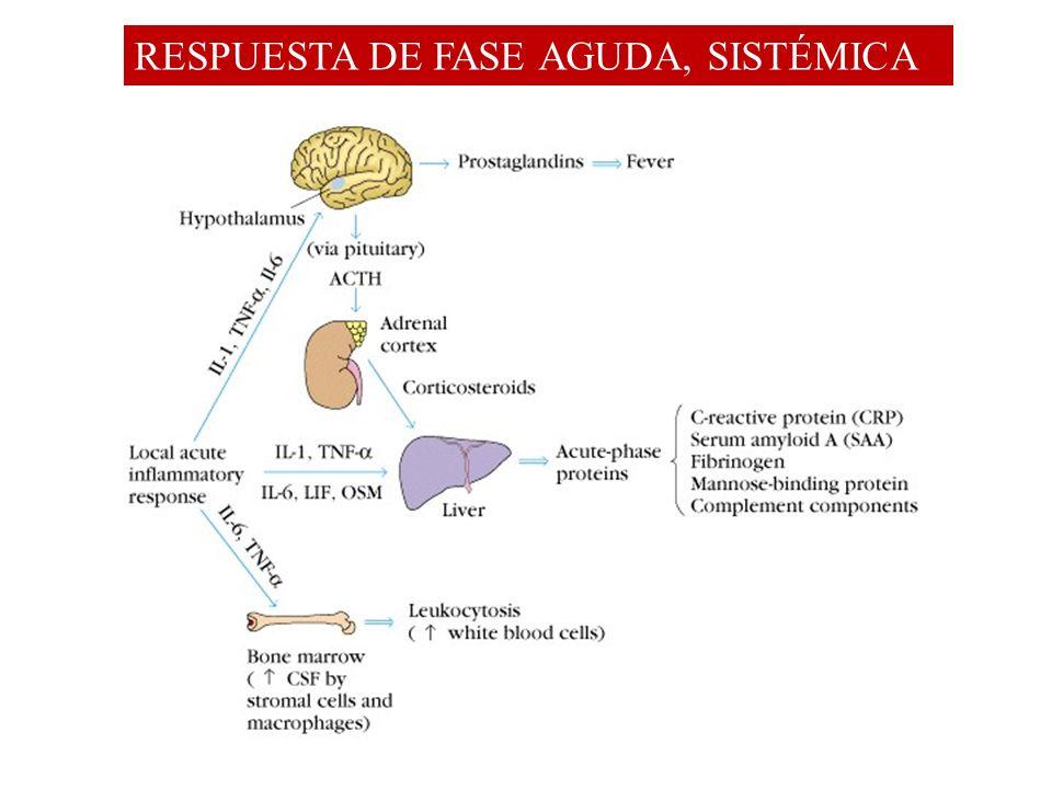 RESPUESTA DE FASE AGUDA, SISTÉMICA