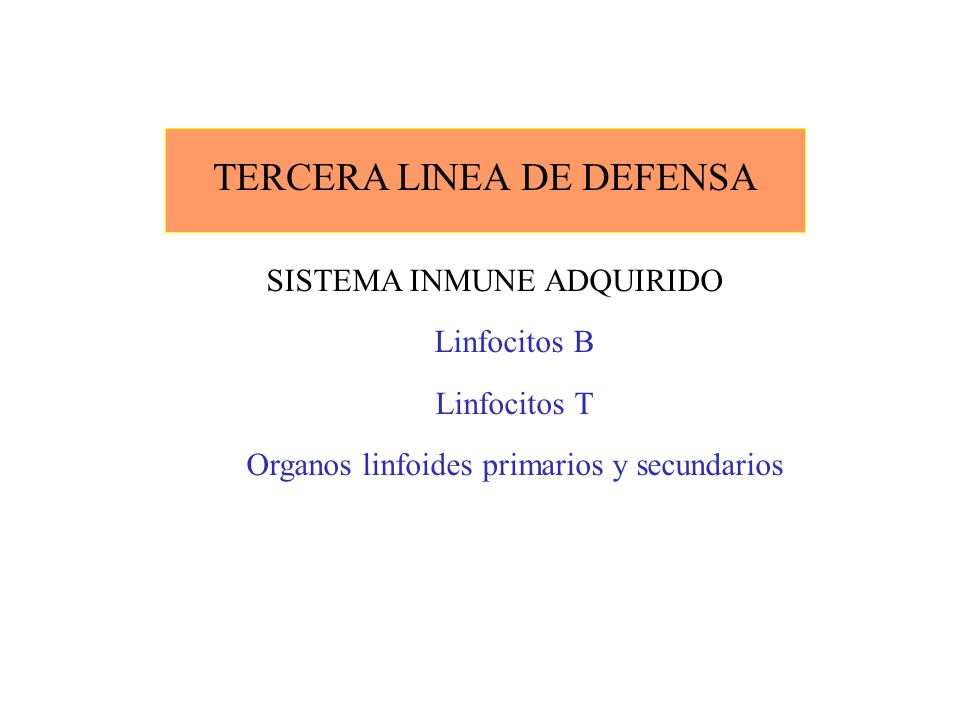 TERCERA LINEA DE DEFENSA