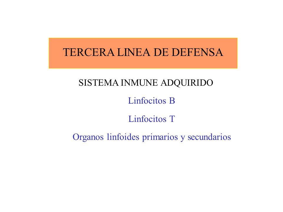 TERCERA LINEA DE DEFENSA