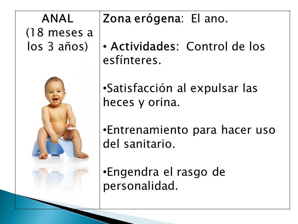 ANAL (18 meses a los 3 años) Zona erógena: El ano. Actividades: Control de los esfínteres. Satisfacción al expulsar las heces y orina.