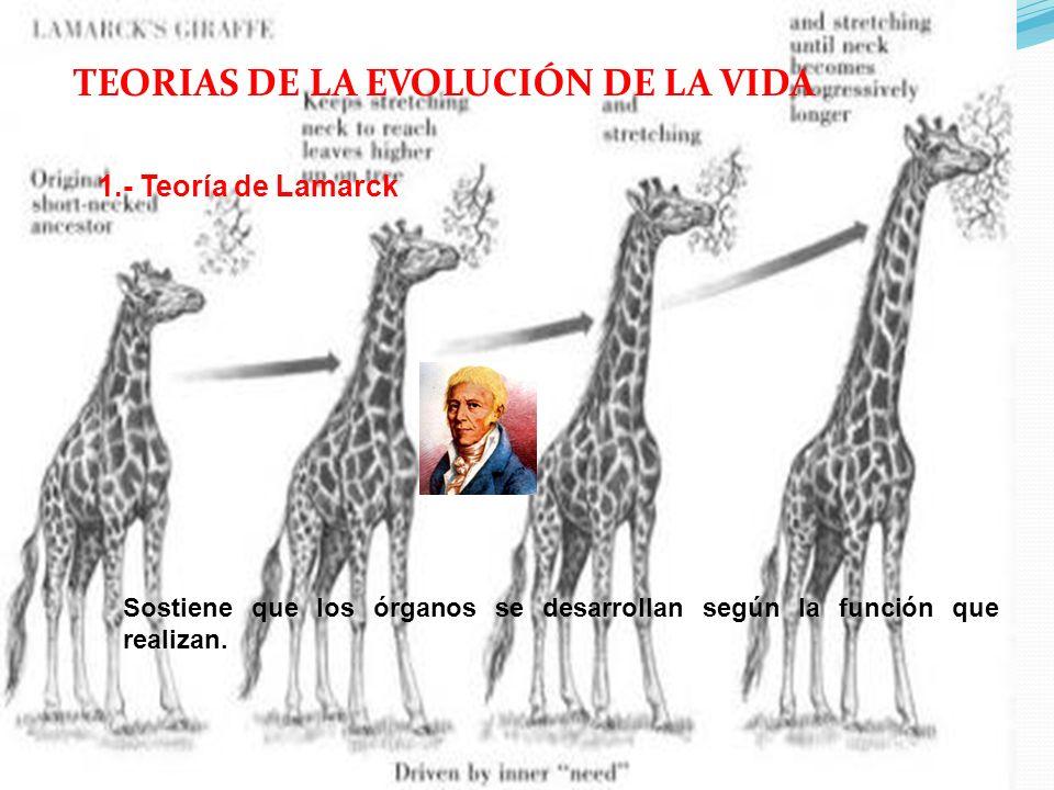 TEORIAS DE LA EVOLUCIÓN DE LA VIDA