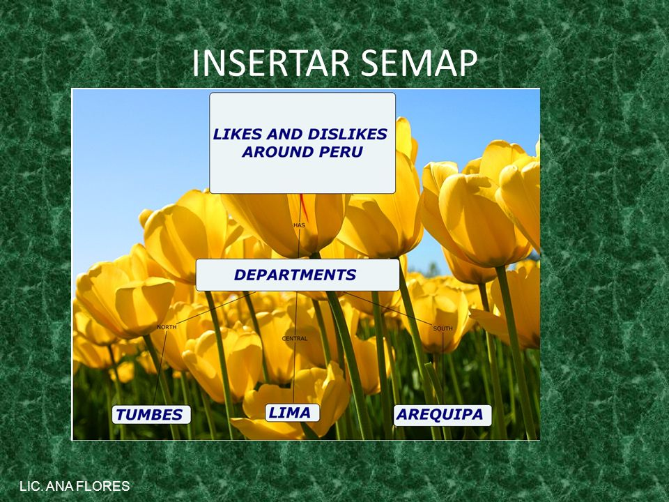 INSERTAR SEMAP LIC. ANA FLORES