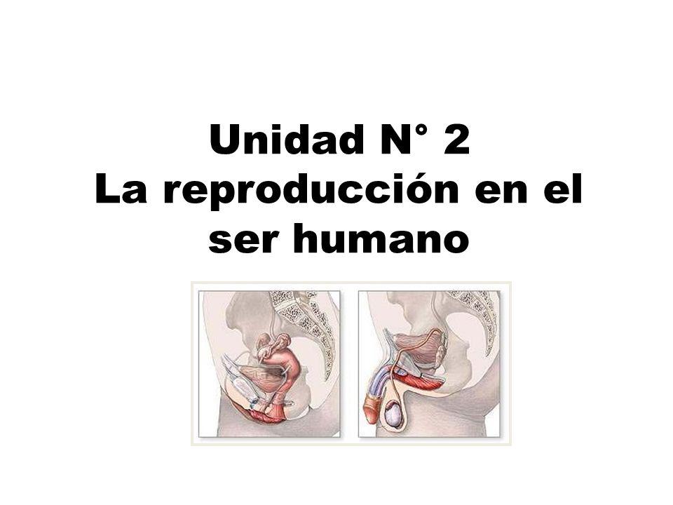 Unidad N° 2 La reproducción en el ser humano