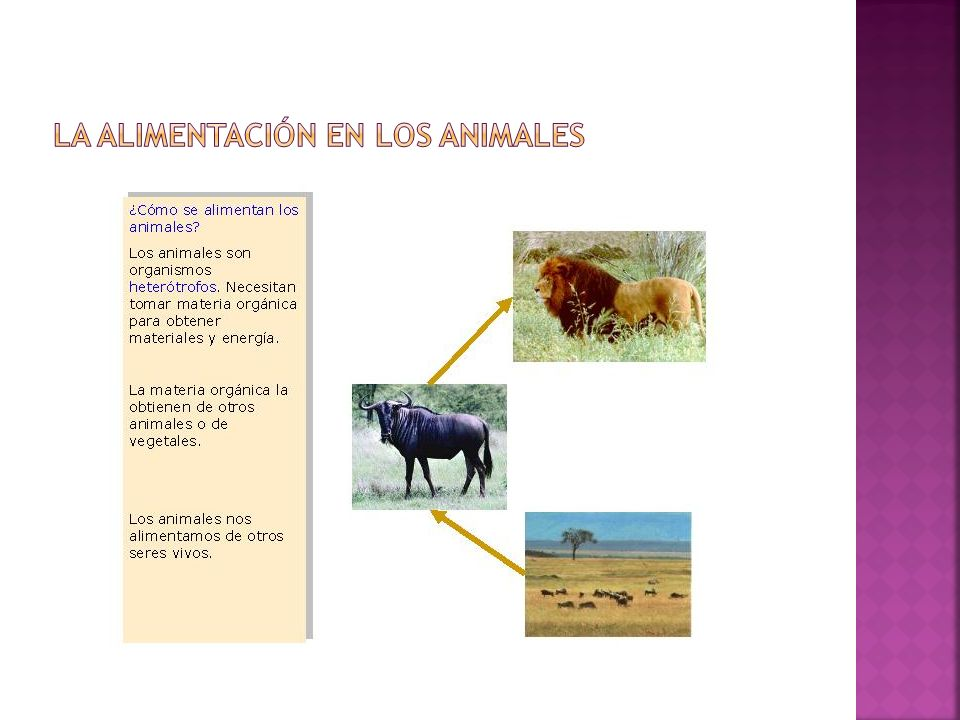La alimentación en los animales