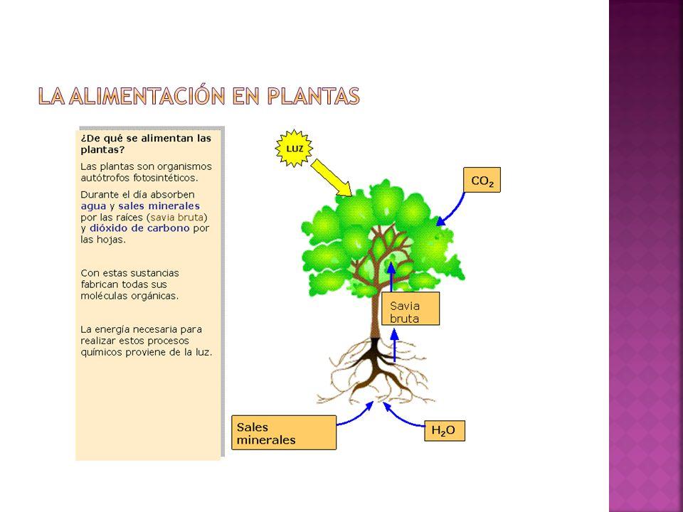 La alimentación en plantas