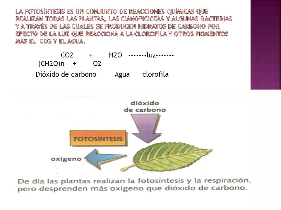 La fotosíntesis es un conjunto de reacciones químicas que realizan todas las plantas, las cianoficiceas y algunas bacterias y a través de las cuales se producen hidratos de carbono por efecto de la luz que reacciona a la clorofila y otros pigmentos mas el Co2 y el agua.