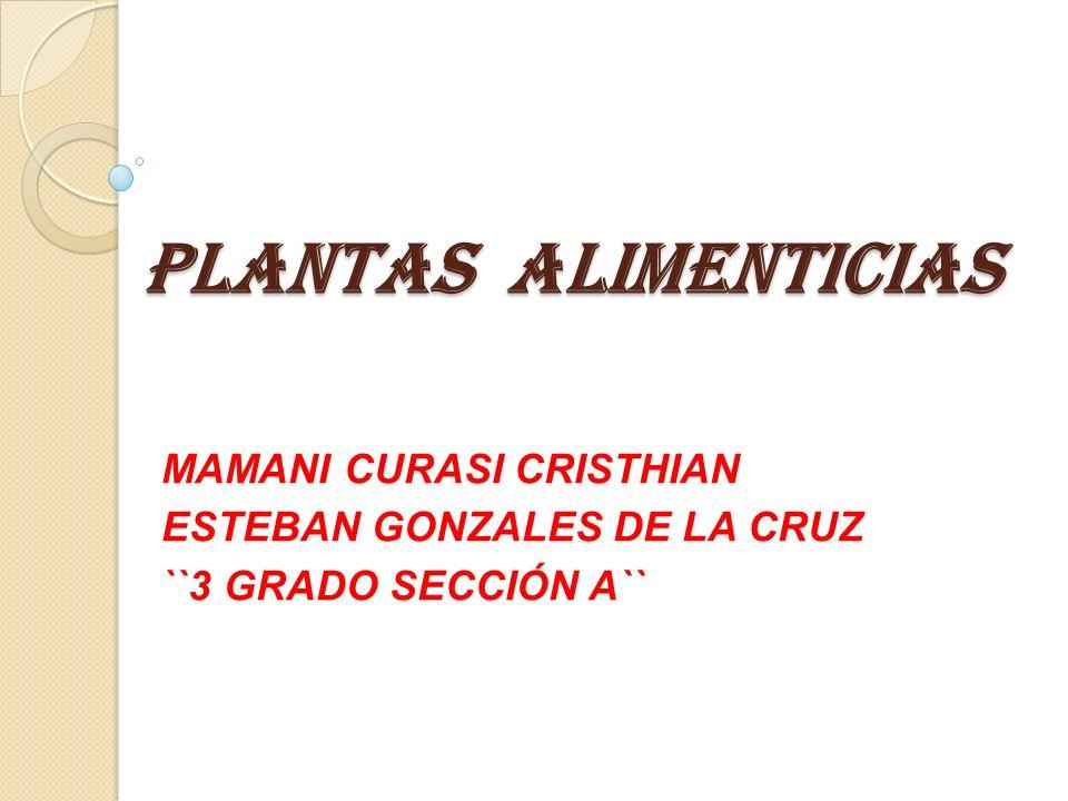 PLANTAS ALIMENTICIAS MAMANI CURASI CRISTHIAN