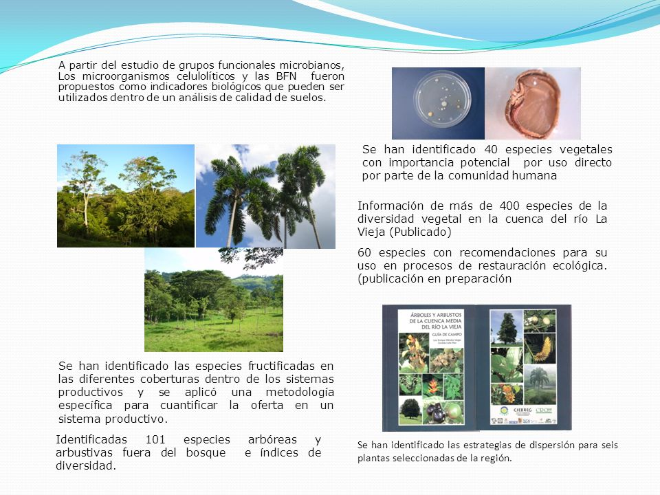 A partir del estudio de grupos funcionales microbianos, Los microorganismos celulolíticos y las BFN fueron propuestos como indicadores biológicos que pueden ser utilizados dentro de un análisis de calidad de suelos.