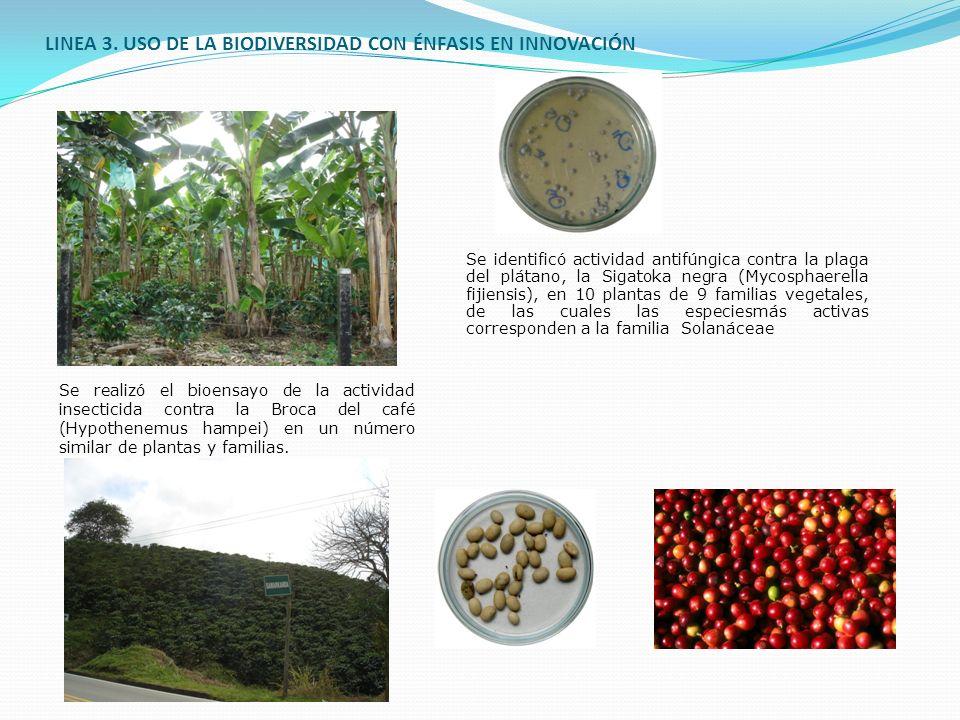LINEA 3. USO DE LA BIODIVERSIDAD CON ÉNFASIS EN INNOVACIÓN
