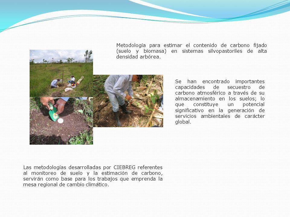 Metodología para estimar el contenido de carbono fijado (suelo y biomasa) en sistemas silvopastoriles de alta densidad arbórea.