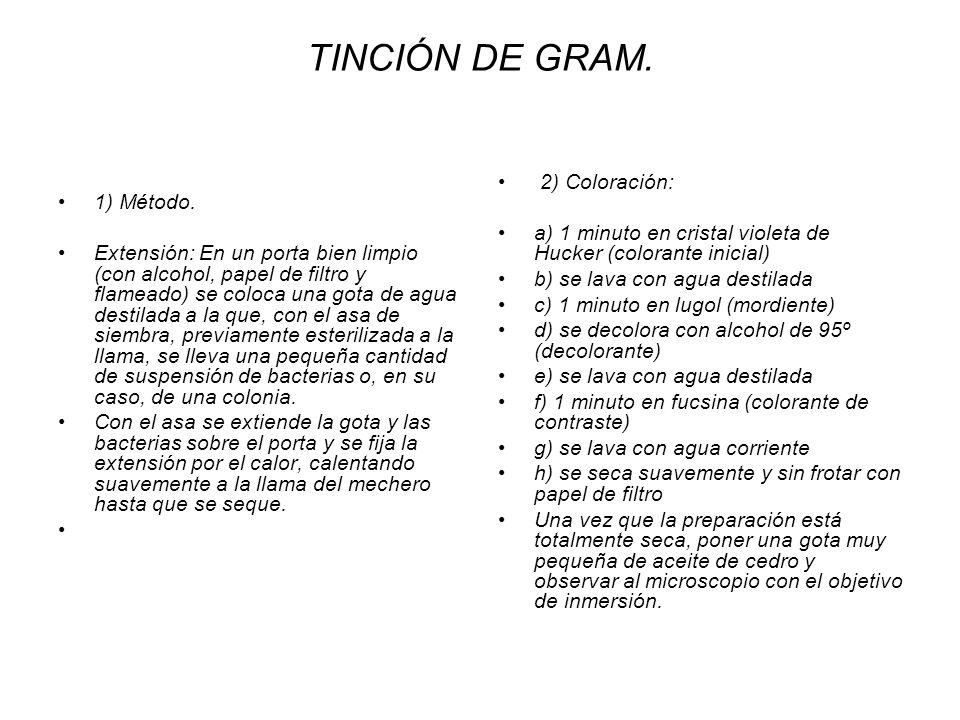 TINCIÓN DE GRAM. 2) Coloración: 1) Método.