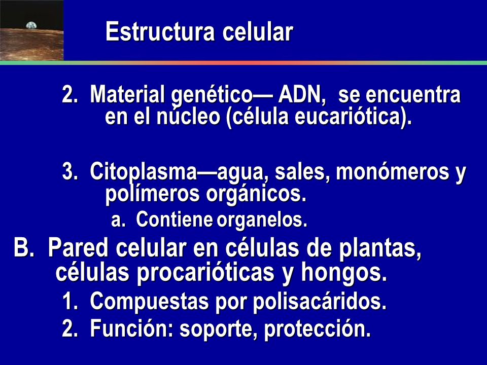 Estructura celular2. Material genético— ADN, se encuentra en el núcleo (célula eucariótica).