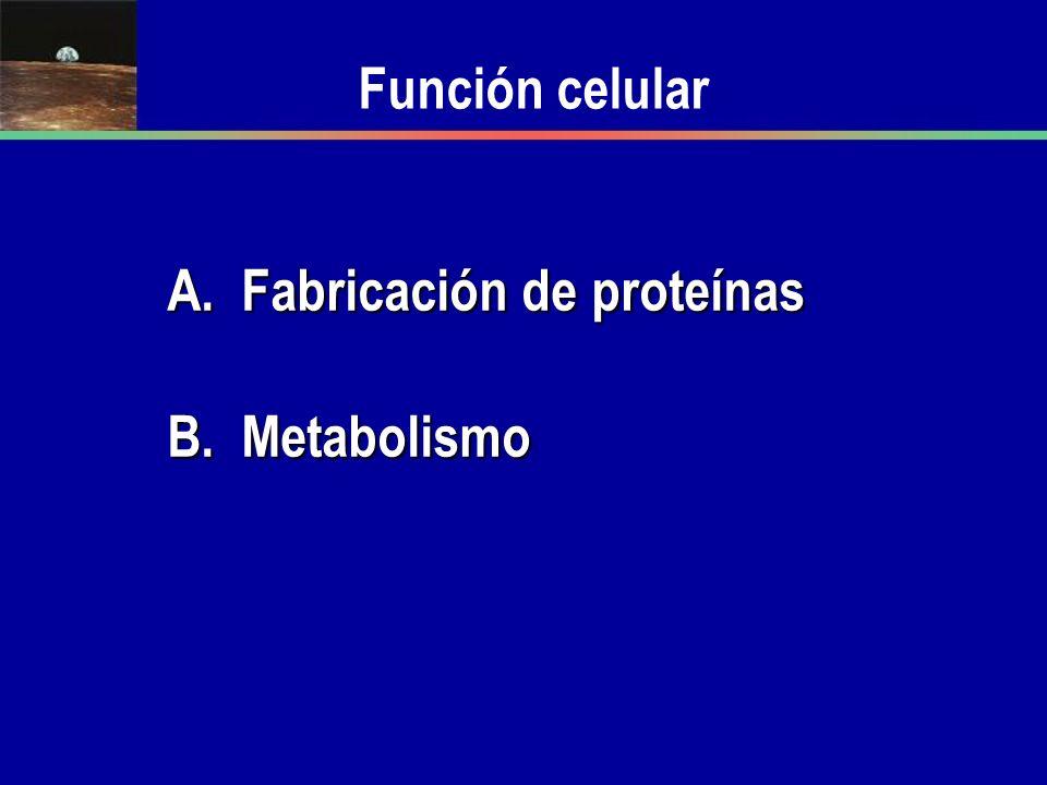 Función celular A. Fabricación de proteínas B. Metabolismo