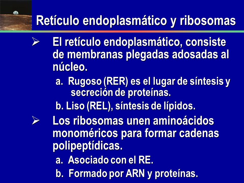 Retículo endoplasmático y ribosomas