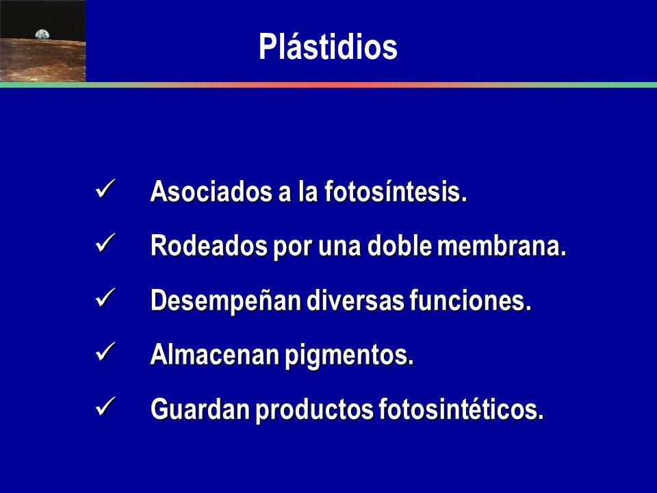 Plástidios Asociados a la fotosíntesis.