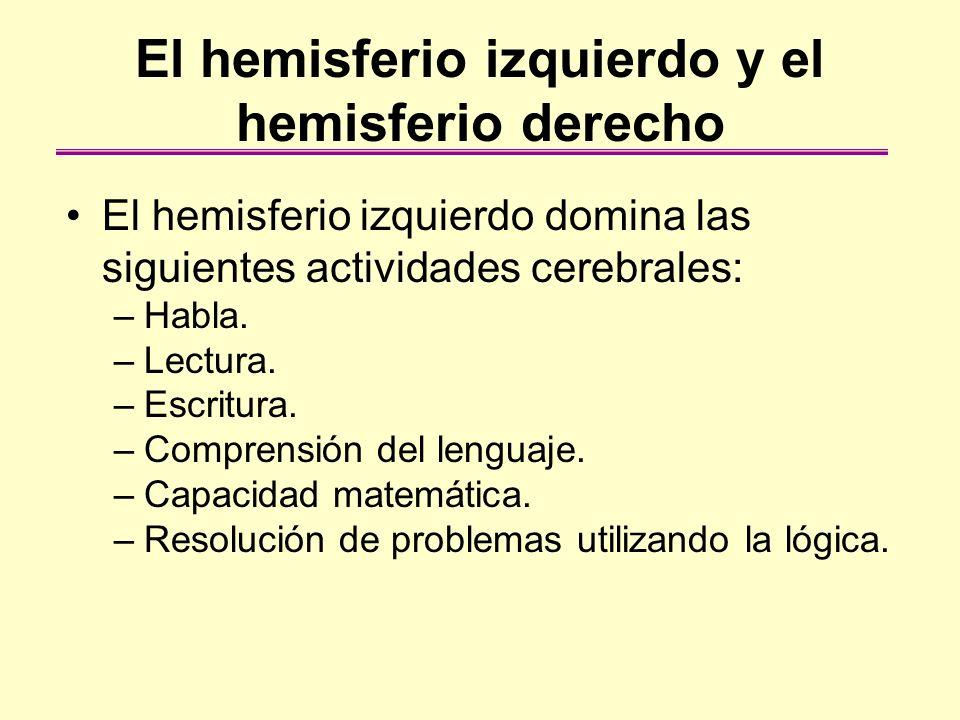 El hemisferio izquierdo y el hemisferio derecho