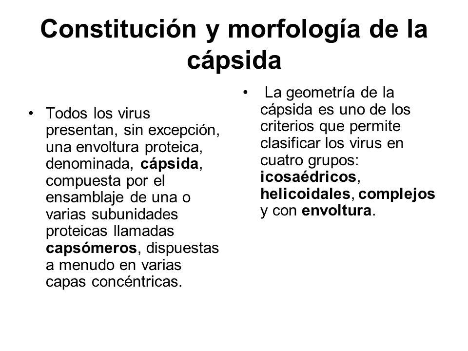 Constitución y morfología de la cápsida