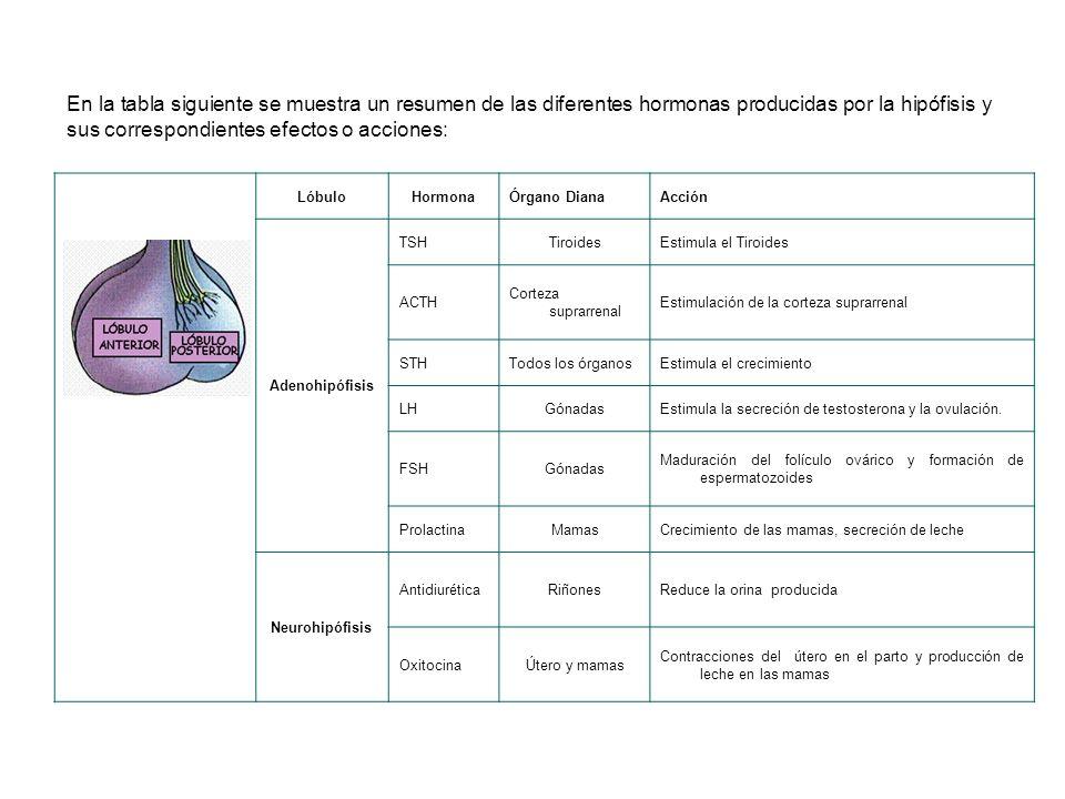 En la tabla siguiente se muestra un resumen de las diferentes hormonas producidas por la hipófisis y sus correspondientes efectos o acciones: