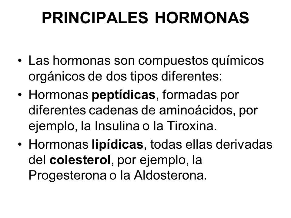 PRINCIPALES HORMONAS Las hormonas son compuestos químicos orgánicos de dos tipos diferentes: