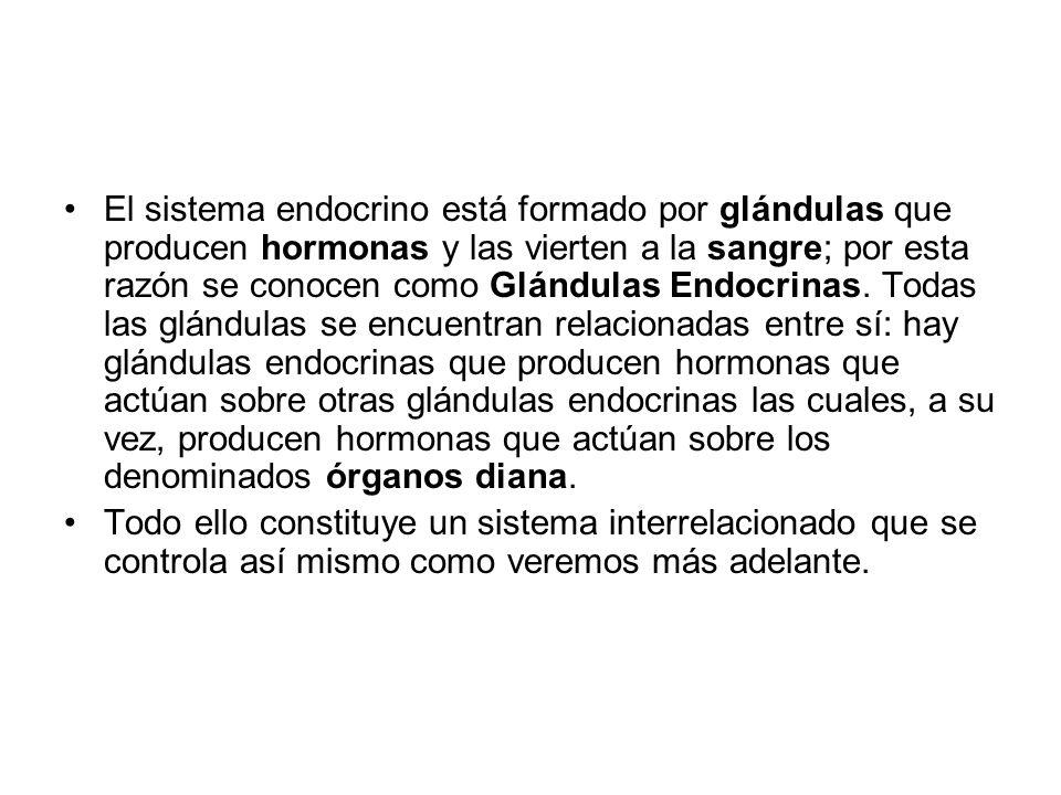 El sistema endocrino está formado por glándulas que producen hormonas y las vierten a la sangre; por esta razón se conocen como Glándulas Endocrinas. Todas las glándulas se encuentran relacionadas entre sí: hay glándulas endocrinas que producen hormonas que actúan sobre otras glándulas endocrinas las cuales, a su vez, producen hormonas que actúan sobre los denominados órganos diana.