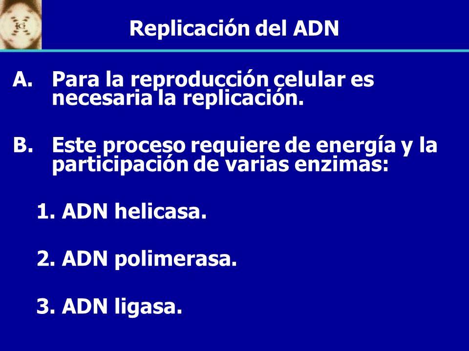 Replicación del ADN Para la reproducción celular es necesaria la replicación. Este proceso requiere de energía y la participación de varias enzimas: