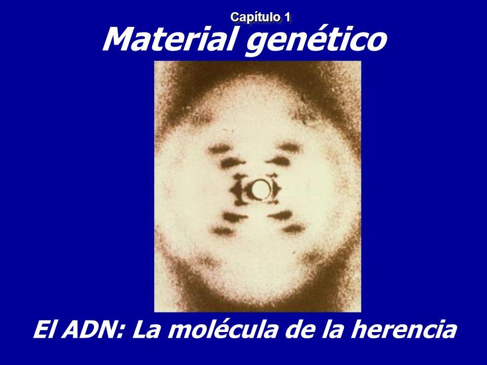 El ADN: La molécula de la herencia