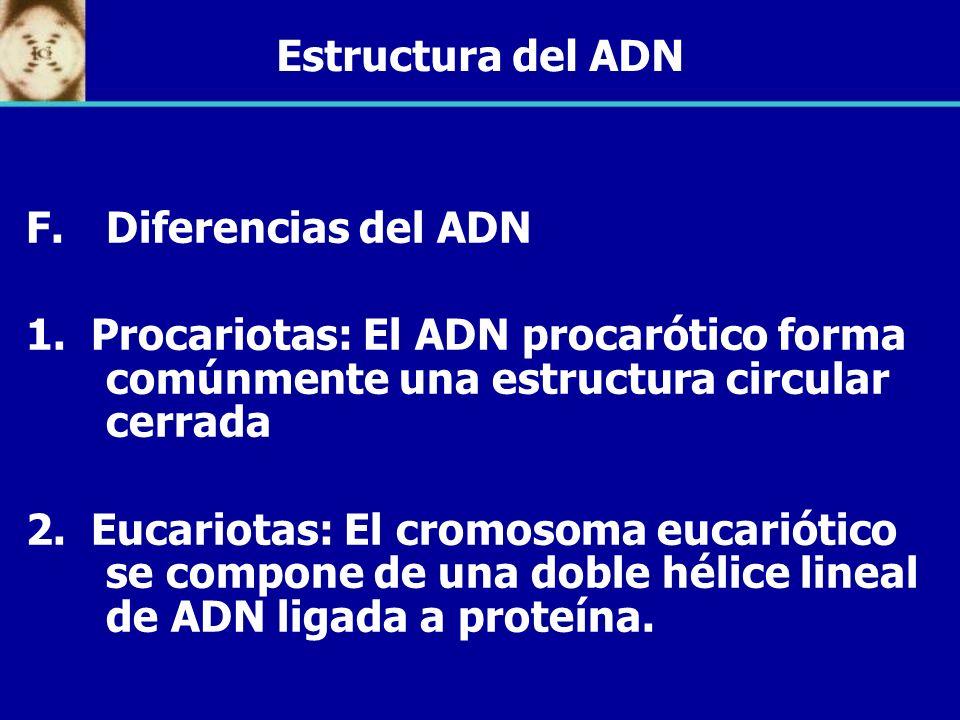 Estructura del ADN Diferencias del ADN. 1. Procariotas: El ADN procarótico forma comúnmente una estructura circular cerrada.