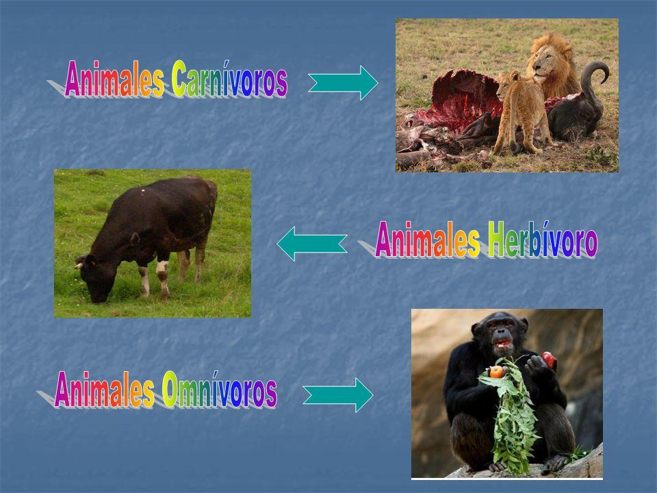Animales Carnívoros Animales Herbívoro Animales Omnívoros