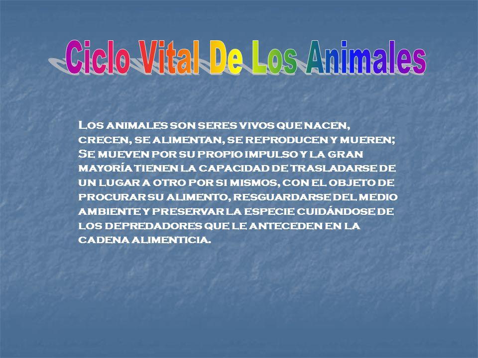 Ciclo Vital De Los Animales