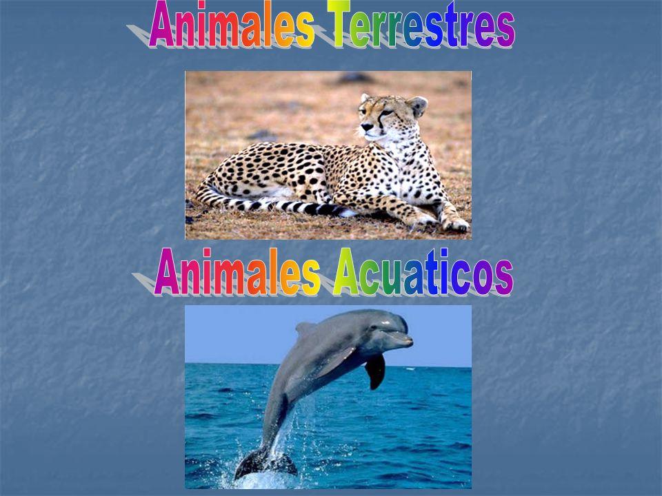 Animales Terrestres Animales Acuaticos