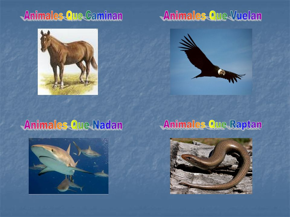 Animales Que Caminan Animales Que Vuelan Animales Que Nadan Animales Que Raptan