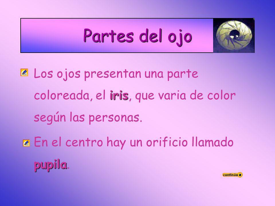 Partes del ojoLos ojos presentan una parte coloreada, el iris, que varia de color según las personas.