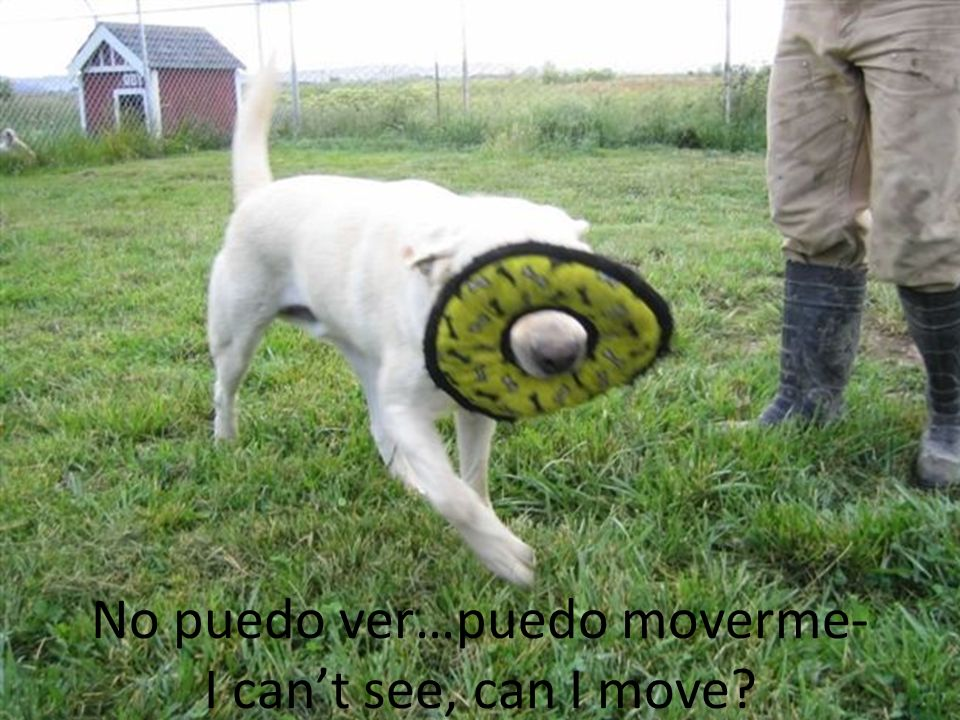 No puedo ver…puedo moverme- I can't see, can I move
