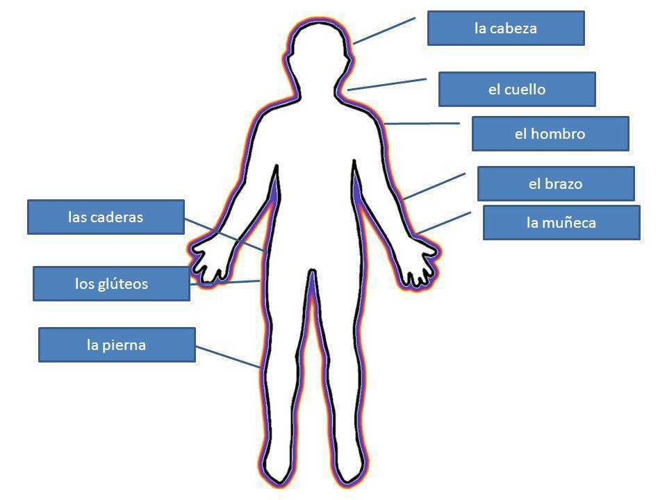 la cabeza el cuello el hombro el brazo las caderas la muñeca los glúteos la pierna