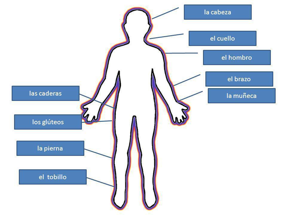la cabeza el cuello el hombro el brazo las caderas la muñeca los glúteos la pierna el tobillo
