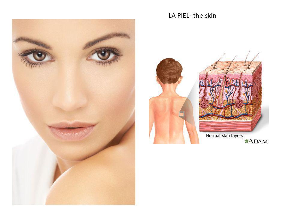 LA PIEL- the skin