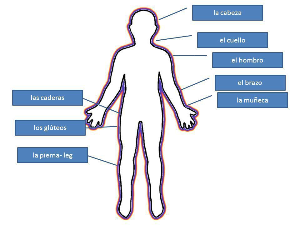 la cabeza el cuello el hombro el brazo las caderas la muñeca los glúteos la pierna- leg