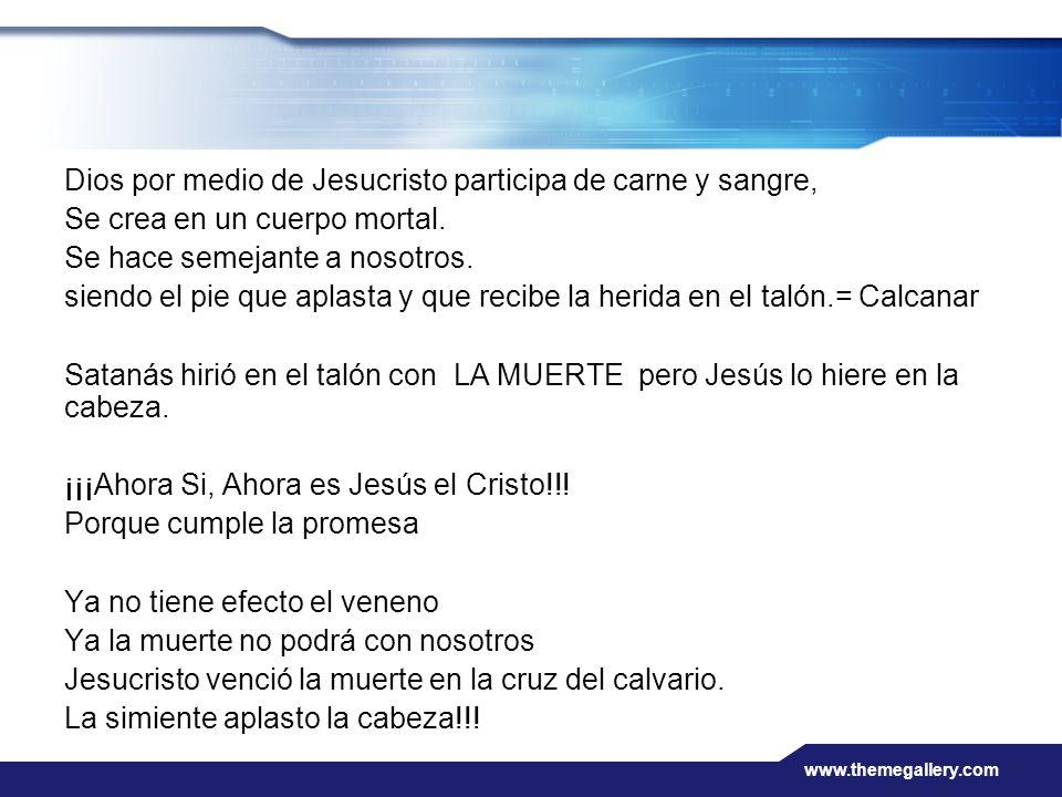 Dios por medio de Jesucristo participa de carne y sangre,