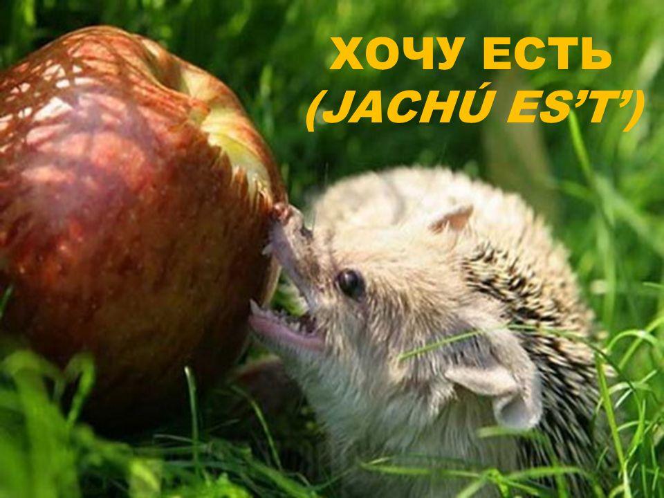 ХОЧУ ЕСТЬ (JACHÚ ES'T')