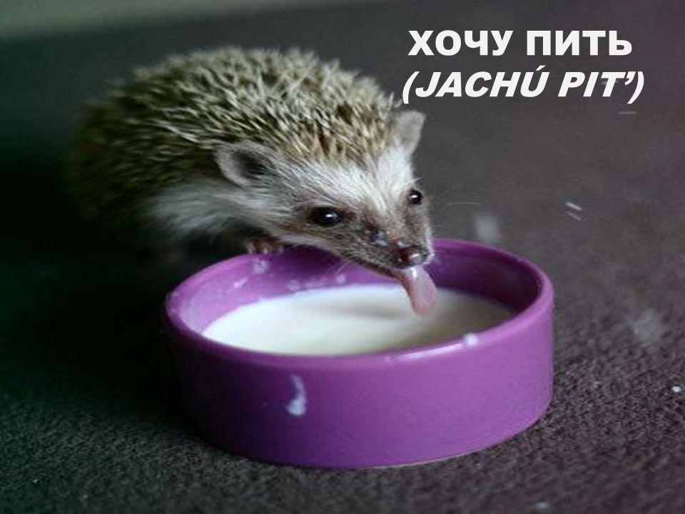 ХОЧУ ПИТЬ (JACHÚ PIT')