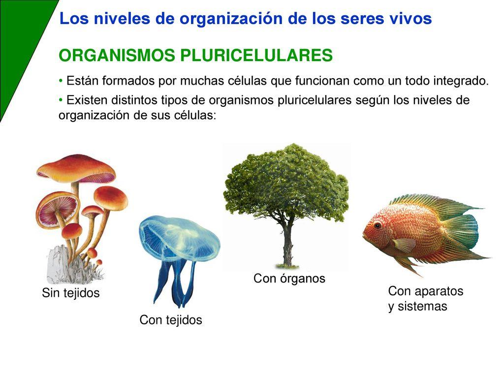 Los niveles de organizaci n de los seres vivos ppt descargar for Como estan formados los suelos
