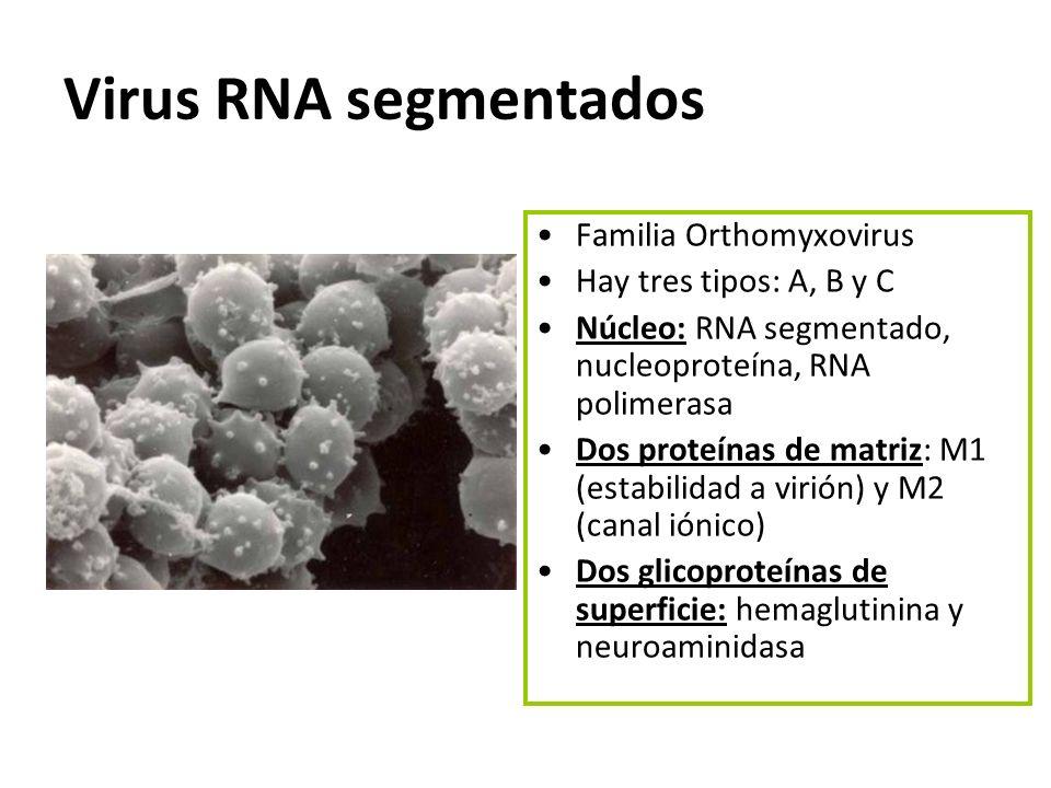 Virus RNA segmentados Familia Orthomyxovirus Hay tres tipos: A, B y C