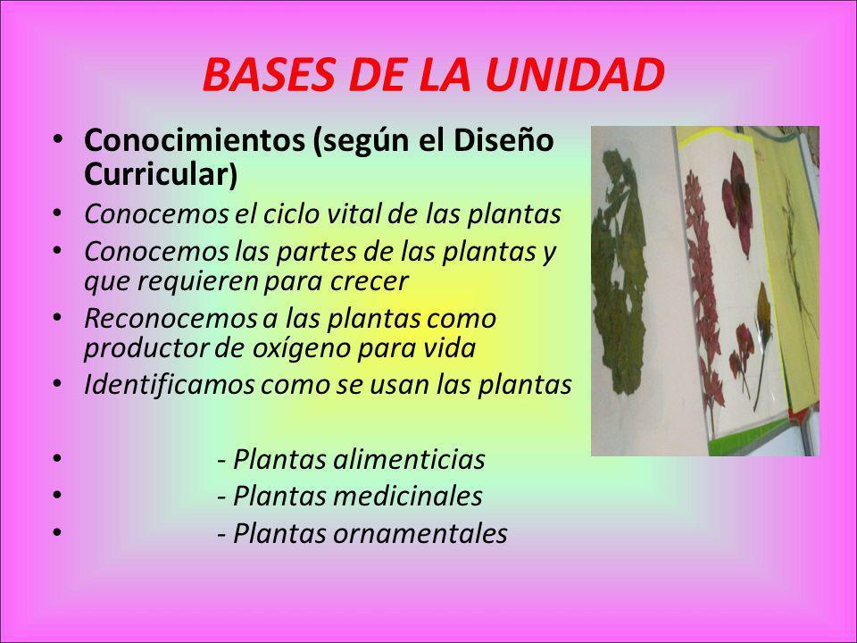 BASES DE LA UNIDAD Conocimientos (según el Diseño Curricular)