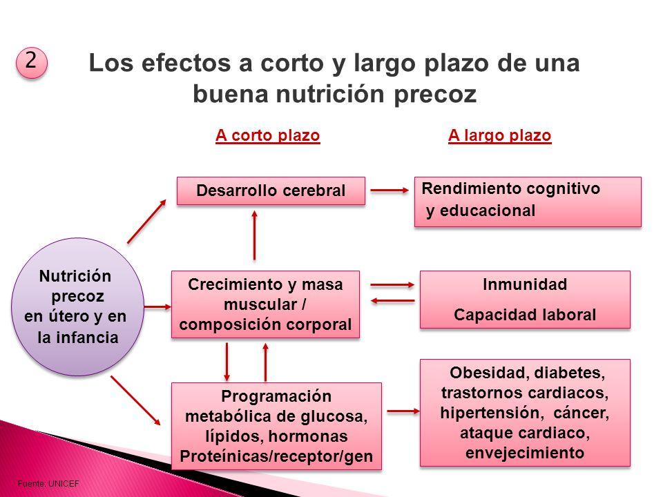 Los efectos a corto y largo plazo de una buena nutrición precoz