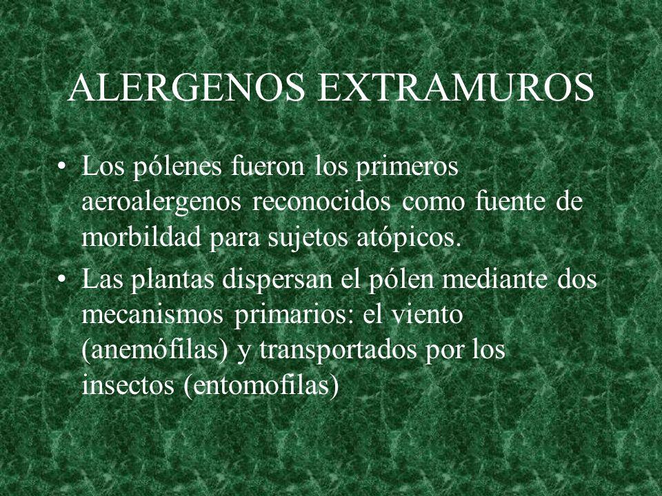 ALERGENOS EXTRAMUROS Los pólenes fueron los primeros aeroalergenos reconocidos como fuente de morbildad para sujetos atópicos.