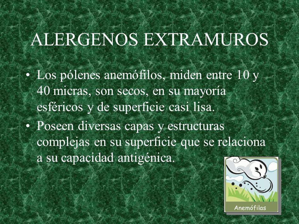 ALERGENOS EXTRAMUROS Los pólenes anemófilos, miden entre 10 y 40 micras, son secos, en su mayoría esféricos y de superficie casi lisa.