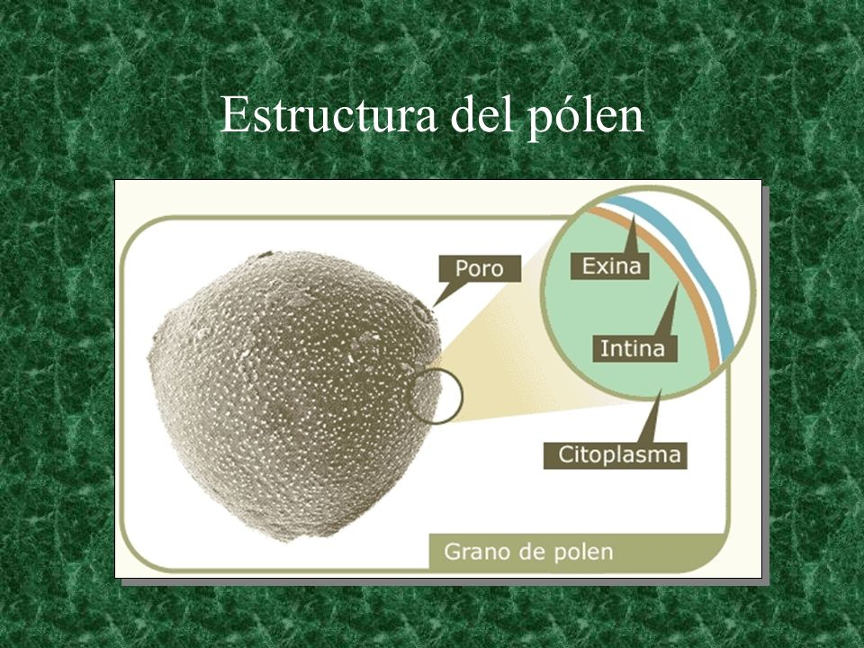 Estructura del pólen