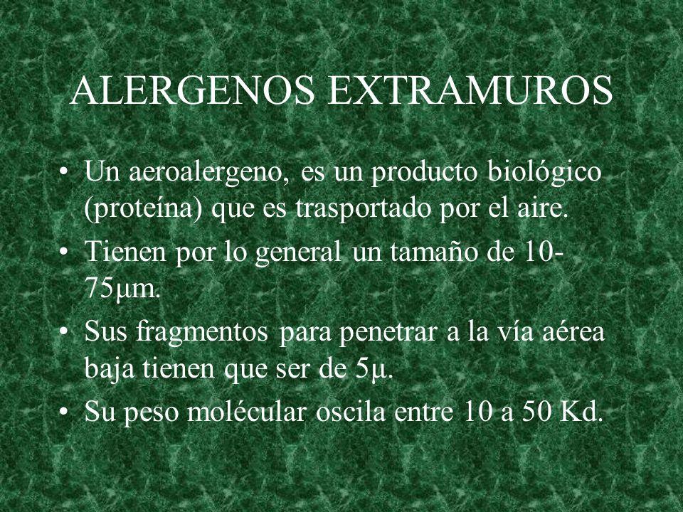ALERGENOS EXTRAMUROS Un aeroalergeno, es un producto biológico (proteína) que es trasportado por el aire.